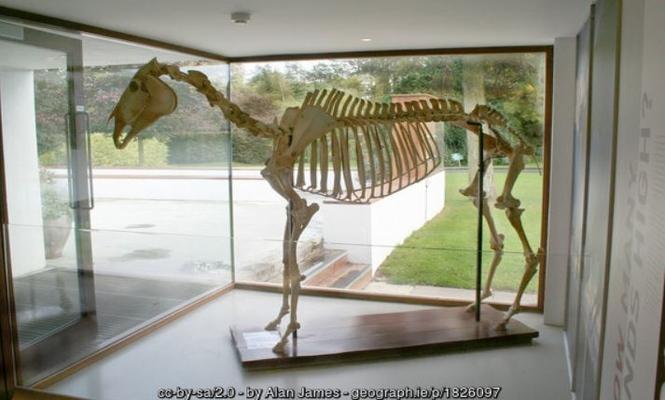 Arkle Skeleton