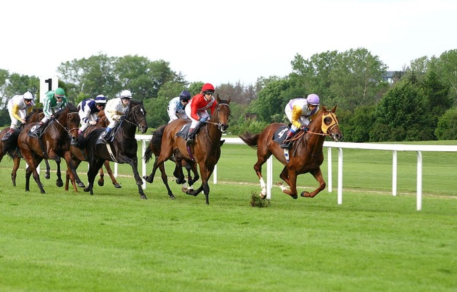 Flat Racing Gallop