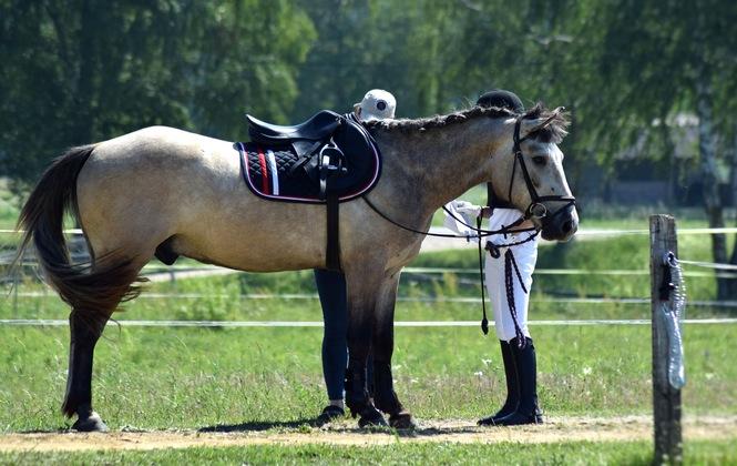 Horse Wearing Racing Saddle