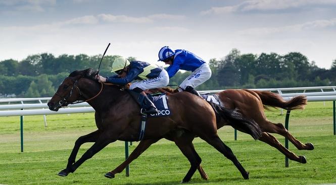 Horses Sprinting at Newmarket