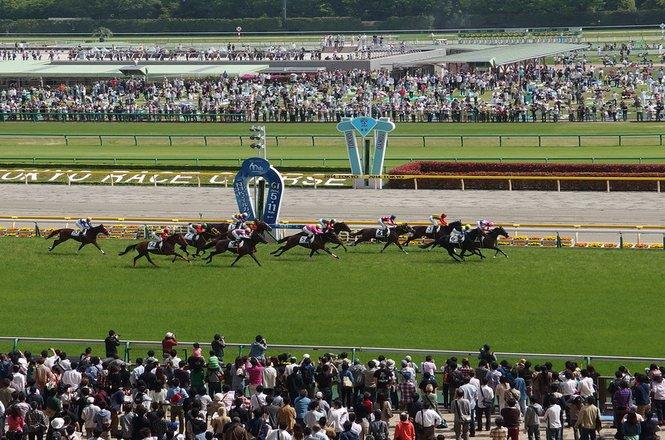 Picking Winners Horse Racing