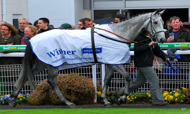 Simonsig Winning Horse Neptune Hurdle